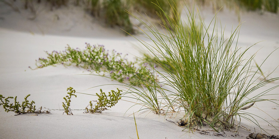 Charming Polish dunes